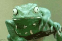 future past: Frog scratching