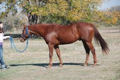SX Bulldacious out of Bully For Casey
