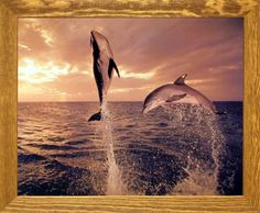 Freedom Dance Tom Brakefield Dolphin Animal Brown Rust Framed Picture Art Print (19x23) Impact Posters Gallery http://www.amazon.com/dp/B00IWLQR8S/ref=cm_sw_r_pi_dp_.heAvb1R5AYME