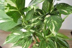 Potus artificial, una alternativa al naturl para decorar cualquier rincón