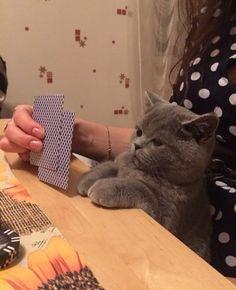 Кот играющий в карты