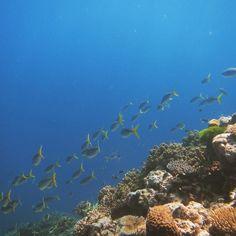 Great Barrier Reef Australia #greatbarrierreef #gbr #australia #snorkeling by k.proksch http://ift.tt/1UokkV2