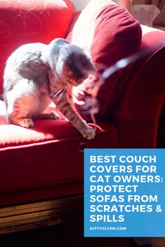 Couch protector covers can be a magic bullet when it comes to combating the two most common frustrations of the cat   furniture combo: scratches and spills. They're not exactly a necessity for everybody (and if they're not for you, I'd recommend checking out other types of cat scratch furniture protectors that may work better), but I can think … Furniture Scratches, Cat Furniture, Best Couch Covers, Couch Protector, Cool Couches, Types Of Cats, Dog Blanket, Magic Bullet, Pet Care Tips
