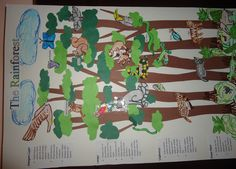 Rain forest Mural: teach science while creating the four levels of the rain forest and the animals that live in them