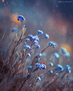 Fotografia Blue Meadows de Magda Bognar na Small Flowers, Blue Flowers, Wild Flowers, Beautiful Flowers, Flowers Today, Art Floral, Flower Wallpaper, Nature Wallpaper, Fine Art Photography