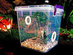 Praying Mantis,Stick Insect,Arboreal Vivarium.Cage,Tank,Enclosure SECONDS