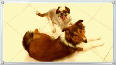My shih tzu and sheltie...
