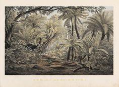 EV Guérard, Ferntree Gulley, Dandenong Ranges, Victoria