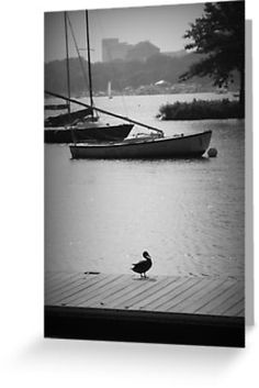 Duck on the Dock - Print For Sale http://www.redbubble.com/people/amandavontobel/works/9220621-duck-on-the-dock