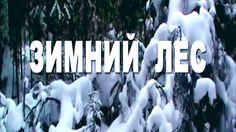 В зимнем лесу!! Живая природа!