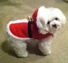 Find great holiday dog clothing and more at www.whirlydogsupplies.com