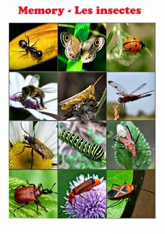 Insect Crafts, Bug Crafts, Science Center Preschool, Preschool Activities, Diy Pour Enfants, Alzheimers Activities, Bugs And Insects, Memory Games, Like Animals