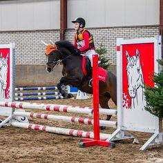 Showjumping, earbonnet, flybonnet, equine, ear bonnet, fly bonnet, flyveil, horse riding, pony, horse, jump