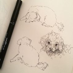 Pippa the toypoodle sketches Sketchbook Drawings, Sketch Drawing, Sketching, Draw Animals, Animals Dog, Observational Drawing, Little Dogs, Inktober, Pet Dogs