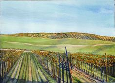 As a stark contrast to the lush growth in the vineyards in the Spring and Summer around Paso Robles, California, the hills display tidy rows of trimmed back vines in the winter. The scene is graphic, with repeated lines that follow the rolling hills. i painted this scene in watercolor.  http://paperdragonartwork.com/shop.html