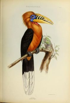 v.2 - The genera of birds : - Biodiversity Heritage Library