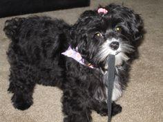 19 Action News Traffic Reporter Ashley Johncola's sweet pup Myla!