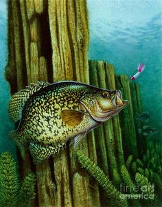 Crappie And Posts Painting by Jon Q Wright