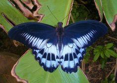 Butterfly by Yawn-Monster.deviantart.com on @deviantART