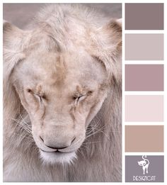Lions Mane: Slate, Beige, Cream, Stone - Colour Inspiration Pallet