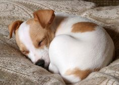 In case you ever wondered why #dogs curl up in a ball while taking a snooze...