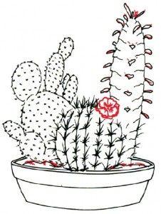 Kaktus mega dating