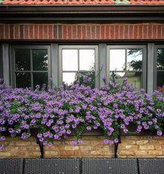 Scewola - niezwykły kwiat balkonowy. Poradzi sobie w każdych warunkach - Genialne Windows, Flowers, Plants, Inspiration, Home Decor, Parapet, Gardening, Crochet Throw Pattern, Biblical Inspiration