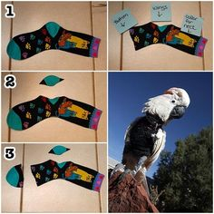 this was shared by Jacqueline Bedsaul Johnson from Best Friends Animal Society – Parrot Garden on Facebook This photo was taken at Best Friends Parrot Garden and the design was shared with th…