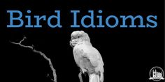 Learn 10 idioms related to birds. Includes examples of how to use them in your English exams! Star Trek Convention, Baby Swan, English Exam, Common Birds, How To Wake Up Early, Idioms, How To Look Better, Told You So, This Or That Questions