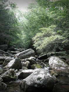 Smokey Mountian Trout Stream.