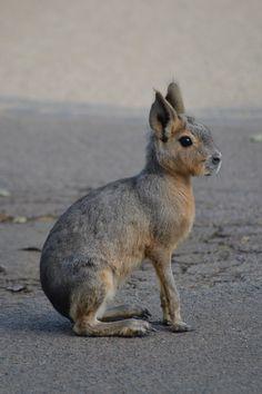 Mara Pets - Pets Vale