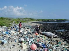 Formerly a lovely white sand beach this Hawaiian stretch is now a trap for countless tons of trash
