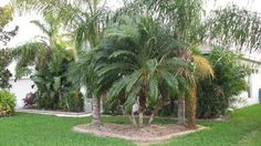 Before & After -       Bream's Landscaping, Inc.               321-984-2489
