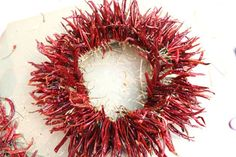 A wreath made of chili peppers adds spice to your home, whether it's to warm up your winter holiday décor, lend some sizzle to summer entertaining or brighten up your kitchen all year long. Dried Peppers, Red Chili Peppers, Mexico Christmas, How To Make Chili, Christmas Wreaths, Christmas Decorations, Diy Wreath, Wreath Making, How To Make Wreaths
