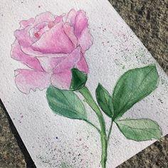 #watercolor #watercolour #akvarell #rose #pink #blomst #hobby #акварель #учусьрисоватьакварелью