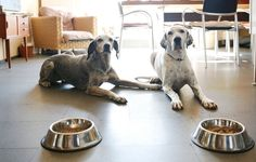 dogs waiting for their food