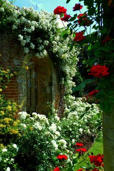 Rose Garden at Hever Castle | Kent