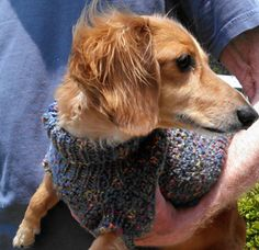 Lena's Cozy Brioche Miniature Dachshund Dog Sweater by Marcia McCormack - This pattern is available for $1.99 USD. It was about time for me to design a snazzy new sweater for our little Lena who is our beautiful, patient, cooperative muse and model, so … came up with this easy to knit cozy brioche sweater! The sweater is knit flat and the front and back are seamed together..