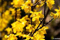 写真 黄色い花 202101 暑い、GWは夏の始まり?(・・?) #写真 #photo #花 #flower