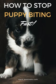 Training your puppy bite inhibition will stop any mouting or chewing behavior. Their sharp teeth are required for them to receive feedback on their biting. Puppy Training Schedule, Training Your Puppy, Brain Training, New Puppy, Puppy Love, Happy Puppy, Stop Puppy From Biting, Puppy Teething, Dog Training Techniques