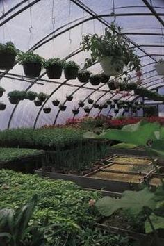 Hoop house greenhouses are easy to build for home gardeners.