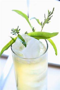lemon verbena mojito | Search Results | The Sugar House Blog     Fun ways to use my LV