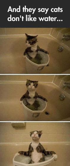 The Cat Bubble Bath - I had a cat like this, would jump into the bathtub with you.