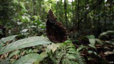 En busca de frenar la biopiratería | Ciencia y Ecología | DW.DE | 19.05.2013