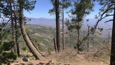 Mount Lemmon outside of Tucson, AZ is like a different planet from Tucson. As you drive, you enter 5 different eco layers. Mount Lemmon, Different Planets, Senior Trip, Discount Travel, Funny Stories, Tucson, Us Travel, North America, Arizona