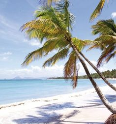 Under the coconut trees,  Trois Islets in Martinique