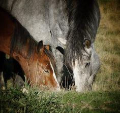 Due bellissimi cavalli immersi nella natura dell'Abruzzo! here two beautiful horses in the nature of Abruzzo! Sandy Beaches, Beautiful Horses, Landscapes, Coast, Pretty Horses, Paisajes, Scenery