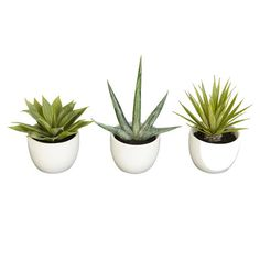 Three piece faux succulent set.   Product: 3 Piece faux botanical arrangement setConstruction Material: Silk and glass...