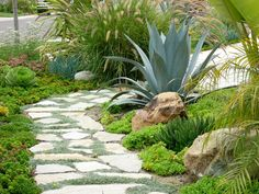 Love this for infront of the kitchen window and and along house in back yard. Flagstone with dymondia and drought tolerant landscape