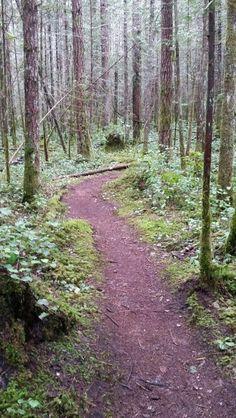 Nymph Falls Regional Nature Park Comox Valley, Courtenay BC Vancouver Island